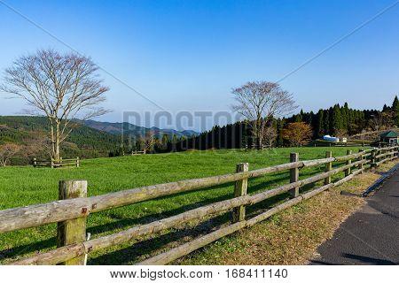 Farmland and sunny day