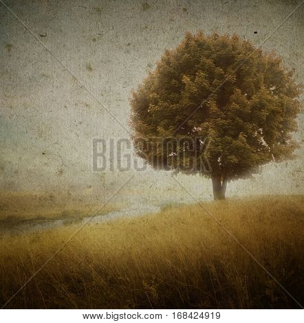Lonely tree at the empty field with river.Grunge image of a field