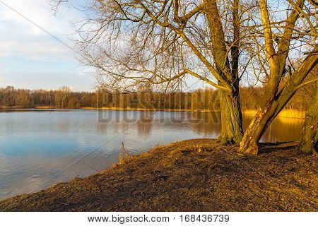 Bare trees in the golden low afternoon sunlight on the banks of mirror smooth lake at the end of a sunny day in the Dutch winter season.