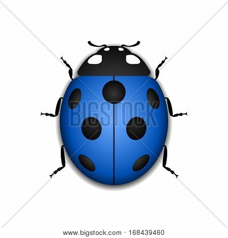 Ladybug Realistic Cartoon Icon
