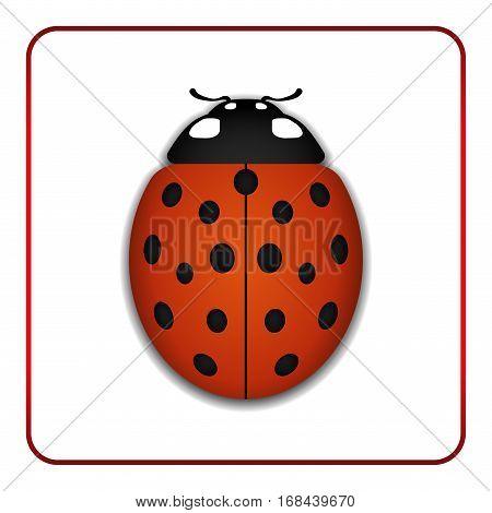 Ladybug Red Cartoon Icon Realistic