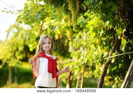 Cute Little Girl Harvesting Grapes In A Vineyard
