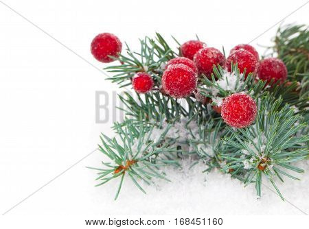 Christmas decorations - fir branch on white snow