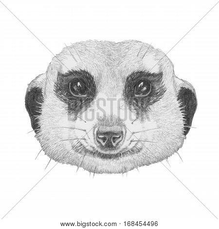 Portrait of Meerkat. Hand drawn illustration. Animals