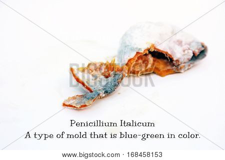 An orange in Decomposition with Peniccilum Digitaum mold. isolated on white with room for your text. Basic information text included which can easily be removed and replaced or used as is.