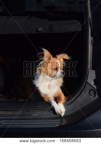 a dog looks into the sun sitting in a car