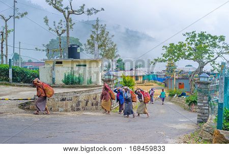 HAPUTALE SRI LANKA - NOVEMBER 30 2016: The tea pickers return to the factory after work in plantations on November 30 in Haputale
