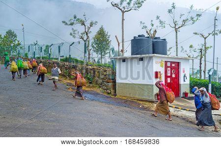 HAPUTALE SRI LANKA - NOVEMBER 30 2016: The tea pickers with big bags return from plantations on November 30 in Haputale