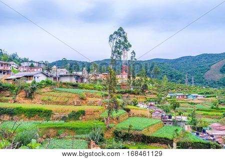 Terraced Gardens In Mountains