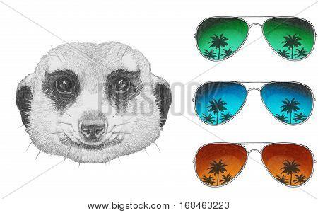 Portrait of Mongoose. Hand drawn illustration. Animals