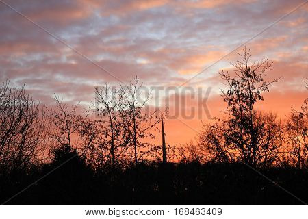 a midwinter sunrise over a dark forest
