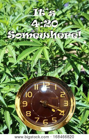 Marijuana Plant background with a wind up clock and the time of 4:20 and the text reading It's 4:20 Somewhere. Represents the Marijuana culture of smoking dope at 4:20 am or pm