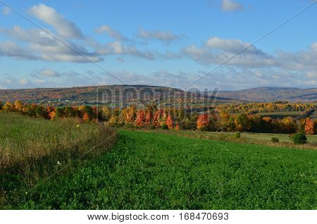 Fall Foliage on the hillside of upstate New York