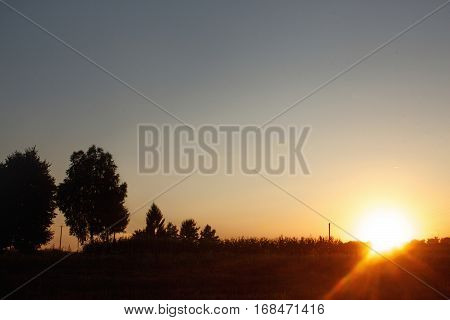 Grass And Trees At Sunset Sky In Summer Meadow, Peaceful Relaxing Moment, Sun Rays, Country Side