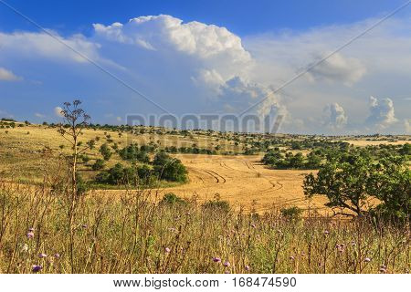 RURAL LANDSCAPE SUMMER. Alta Murgia National Park: Cornfield topped by clouds.Apulia (ITALY).Typical Apulian countryside of Murgia's plateau.
