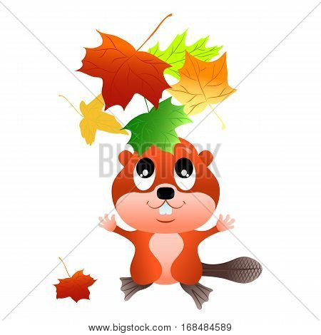 Beaver throws up colorful maple leaves. Vector