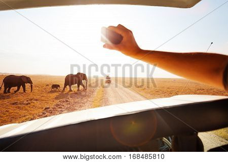 Tourist in safari jeep taking photos with smart phone of elephant's family crossing road in Amboseli national park, Kenya