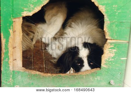 Sad Looking Eyes Of Big Dog In Shelter Cage, Sad Emotional Moment, Adopt Me Concept, Space For Text