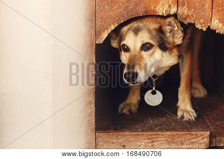 Sad Looking Eyes Of Big Dog In Kennel Shelter Cage, Sad Emotional Moment, Adopt Me Concept, Space Fo