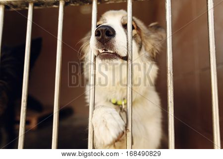 Cute Positive Dog Ponting Paw And Nose In Shelter Cage, Happy And Sad Emotional Moment, Adopt Me Con