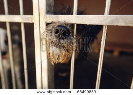 Cute Little Dog Puppy Ponting Nose In Shelter Cage, Sad Emotional Moment, Adopt Me Concept, Space Fo