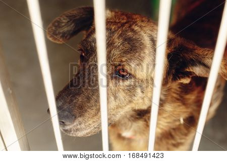 Scared Dog In Shelter Cage With Sad Crying Eyes , Emotional Moment, Adopt Me Concept, Space For Text