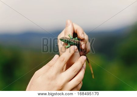 Man Holding Green Lizard In His Hand In Summer Mountains,  Travel  Concept, Space For Text, Discover