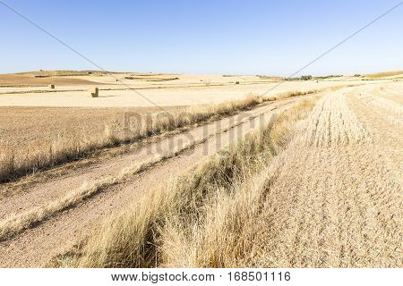 summer landscape with a country road on a summer day in Mosterales plain (Tierra de Campos), Burgos, Spain