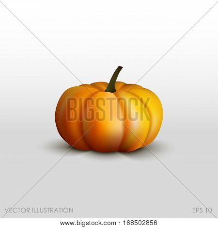 Pumpkin In A Realistic Style On  White Background