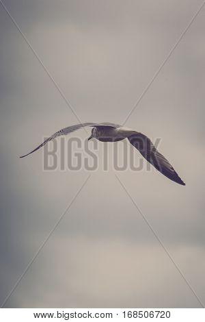 Sea Gull Flying On Dismal Sky