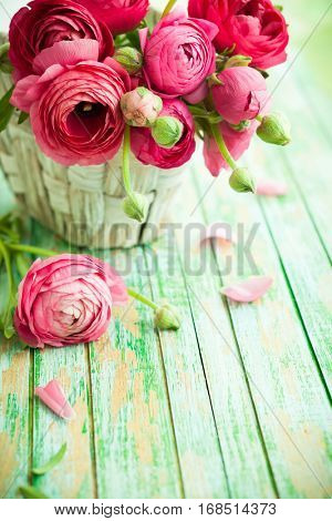Bouquet of pink ranunculus