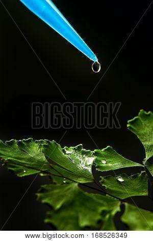 liquid drop on green leaf