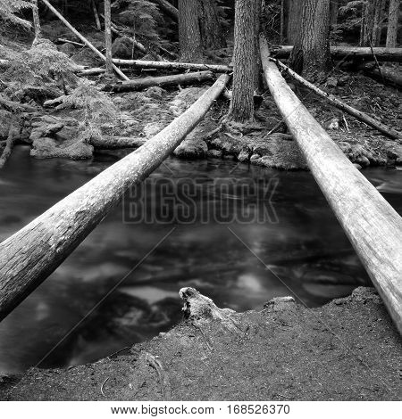 Bare logs span the waters of Clearwater Creek connecting the banks that have fir trees and moss covered rocks on a summer day in the forests of Southern Oregon.