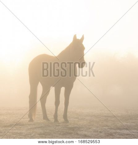 Horse silhouetted against sunrise through heavy fog, in sepia tones