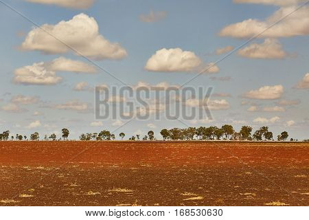 Endless field in bright daylight
