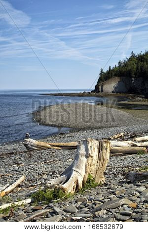 Root sculpted by the sea with a bay in background in Gaspesie, Quebec, Canada