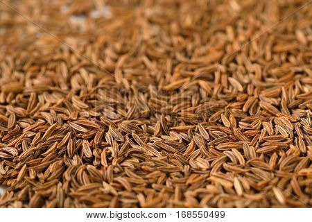 detail of caraway seeds - full frame