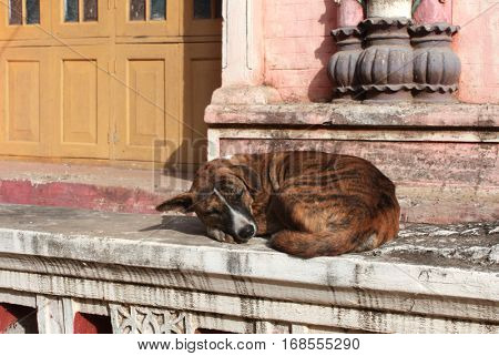 Homeless dog sleeping at the door of a Buddhist monastery, Myanmar