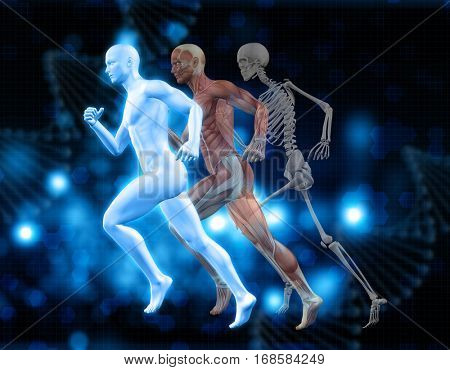 3D medical background with male figures in running pose with muscle map and skeleton