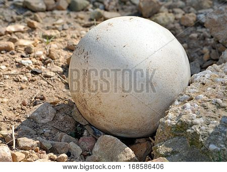 Detailed view of ostrich eggs and stones