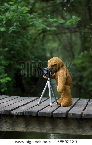 Photographer teddy bear - taking pictures with a retro camera and tripod