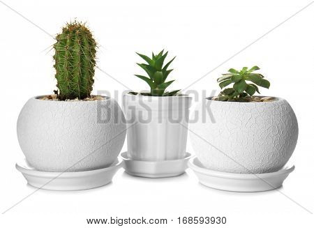 Houseplants in a row isolated on white