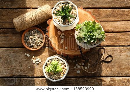 Beautiful composition of houseplants on wooden background
