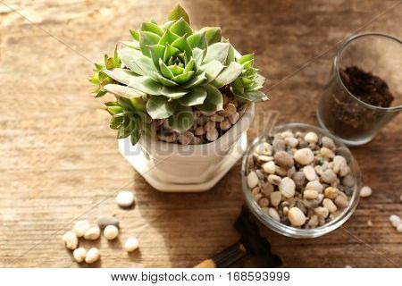 Florist concept. Replanting beautiful succulents on wooden background
