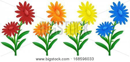 Calendula flowers in four colors illustration