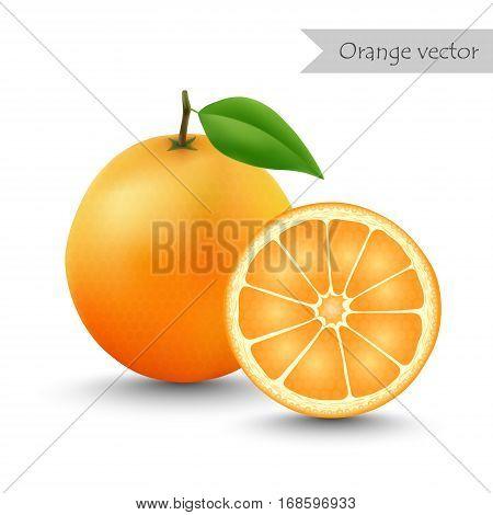 Orange vector isolated on white background. Half orange.