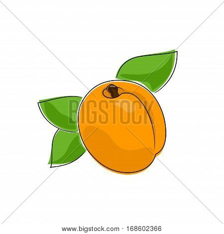 Apricot Isolated on White, Fruit Apricot, Illustration