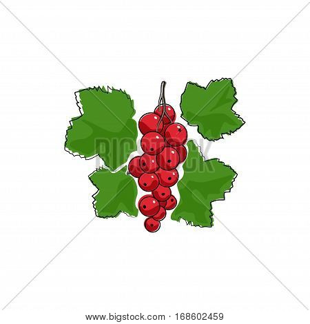 Berry Redcurrant Isolated on White Background, Fruit Redcurrant
