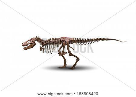 Tyrannosaurus skeleton isolated on white.