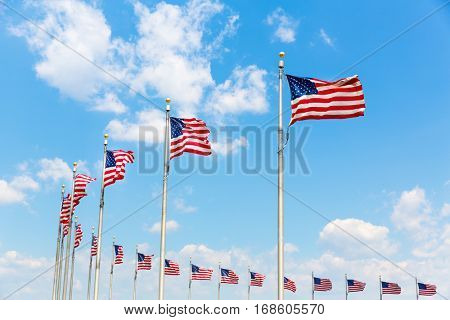 Row American flags in Washington DC